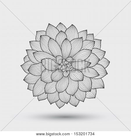 Abstract monochrome floral background. Hand drawing flower dahlia. Element for design.