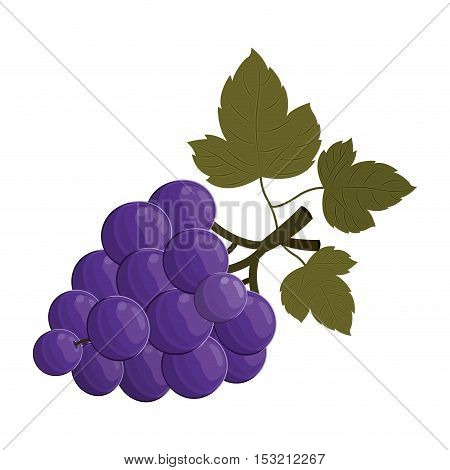 bunch of grapes fruit healthy food over white background. vector illustration
