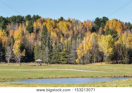 A field and colorful forest in the fall season