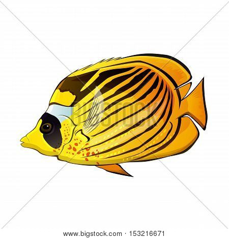 Butterfly fish illustration on a white background