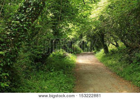 Green walking trail near the coast of Wales.