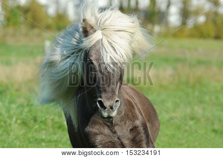Image with some wild horses in the wild. horse. a beautiful animal that impresses every time it is viewed