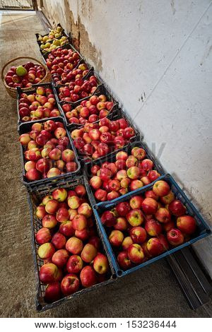 Homegrown Apples In Crates