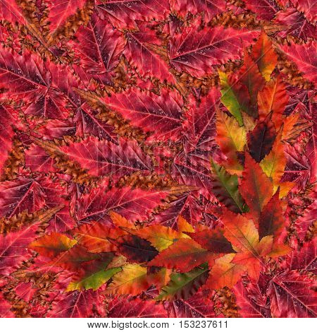 Seamless Background Pattern Texture Made Of Maple Leaves