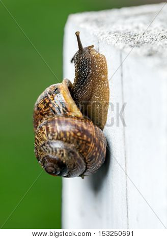 Snail Slowly Creeping Up