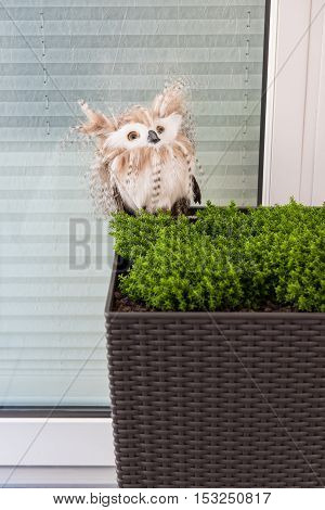 Owl as an autumn decoration in a planter bucket at the window