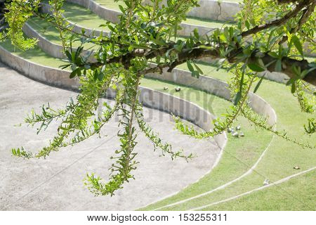 Tree branch in the park stock photo