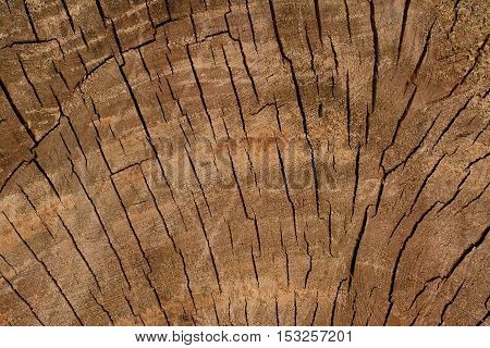 Old Tree Trunk 3