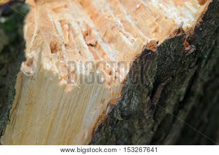 Splintertree Close-up Wooden Texture
