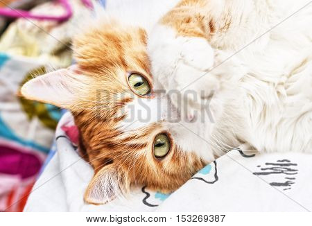 Flirty red cat paw covered face on bed
