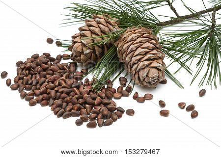 cedar nuts and cedar cones isolated on white background