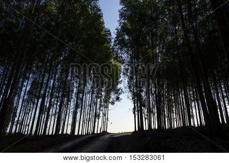 Tree background nature environment plant shadow backlight