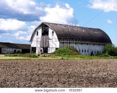 White Barn In Skagit Valley