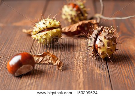 The set of horse chestnuts on a wooden table
