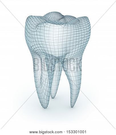 Human molar Tooth wire model 3d illustration