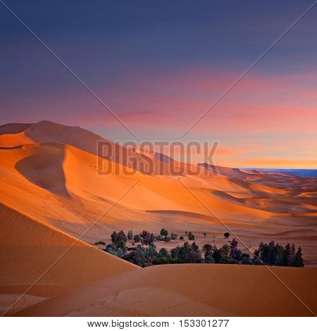 Oasis over Sand dunes in Erg Chebbi of Sahara desert in Morocco, Africa