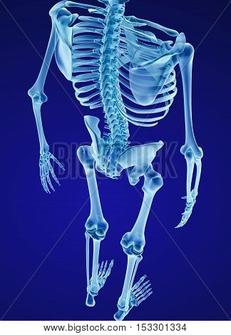 Human skeleton spine and scapula. Medically accurate 3D illustration