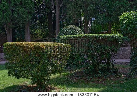 Topiary of geometric shapes on green lawn of resort garden backlight by sun.