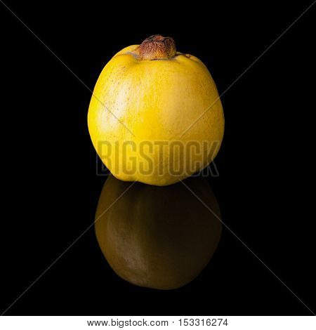 Quince fruit on a black glossy background with realistic reflection