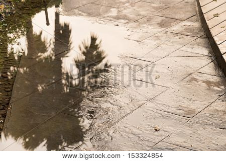Reflection of trees in water that flooded walkway in the park.