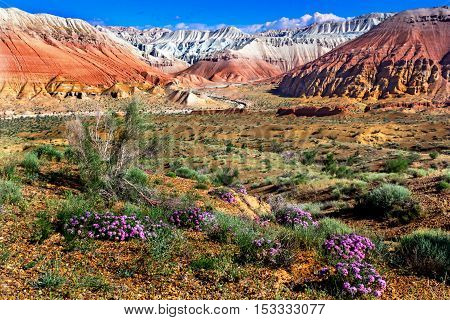 wild flowers in the desert on a background of multicolored mountains and cloudy sky
