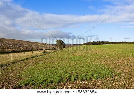 Fields In Autumn