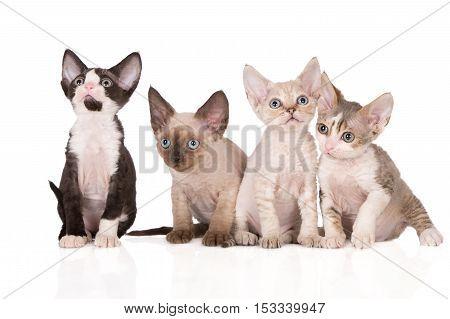 four adorable devon rex kittens posing together on white