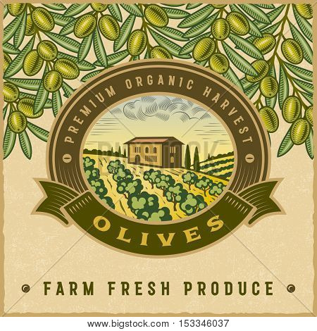 Vintage colorful olive harvest label. Editable vector illustration in retro woodcut style with clipping mask.