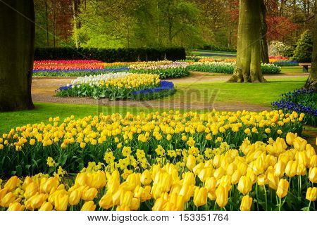Colourful Tulips Flowerbeds and Pathway in an Spring Formal Garden, retro toned