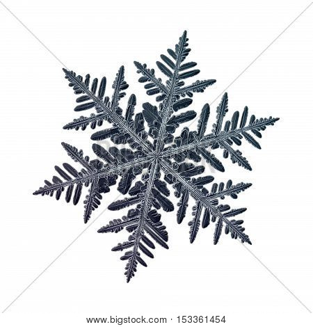 Snowflake isolated on white background: macro photo of real snow crystal, captured on glass with LED back light. This is large fernlike dendrite snowflake with complex structure and detailed arms.