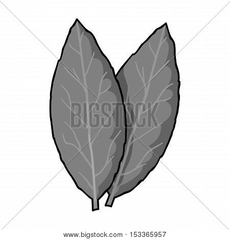 Laurus icon in monochrome style isolated on white background. Herb an spices symbol vector illustration.