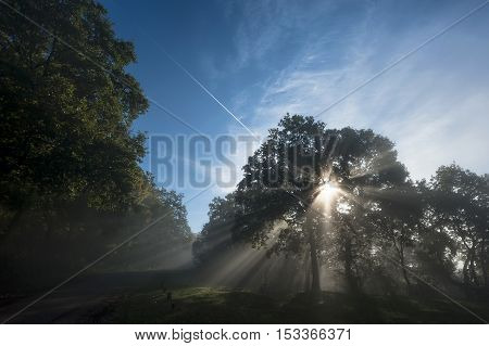 Autumn in forest, sunrays fall through fog and a beautiful red tree with blue sky in background