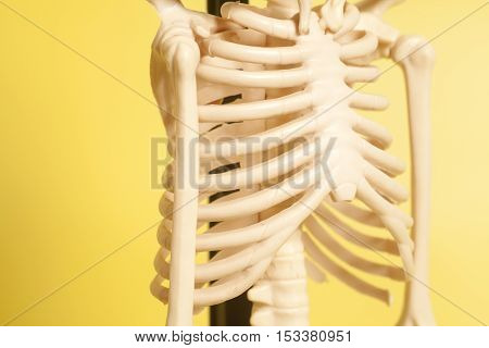 Rib cage of a skeleton on yellow background