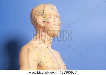 Medical acupuncture model of human head on blue background
