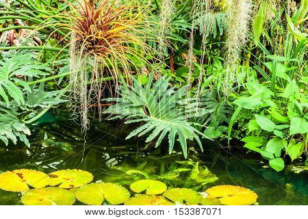 Close up on various tropical plants around water of rainforest environment. Nice fresh background with many shades of green and yellow.