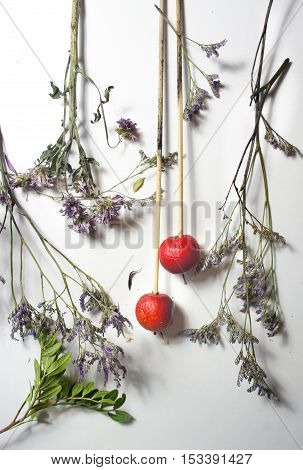 Mix of dry flowers and plants on the white background