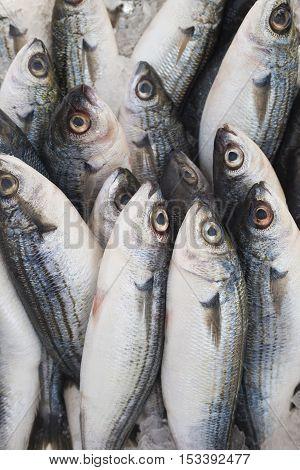 Various fresh fish and seafood at the fish market