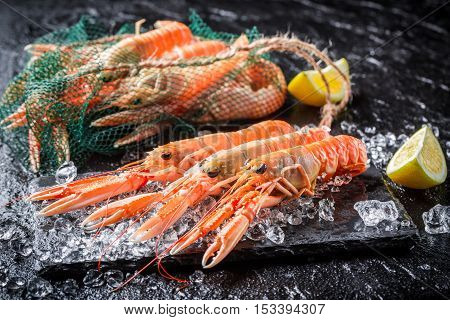 Fresh scampi on ice on black rock