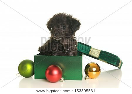 Cute black poodle puppy in a gift box for Christmas with ornaments on a white background
