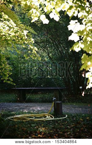 A park bench stands in the undergrowth of trees in a park that is irrigated.