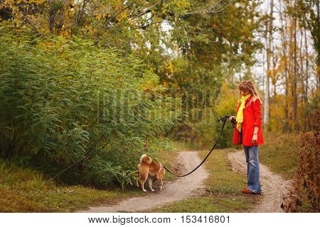 Cute girl walking with a dog Shiba Inu in autumn park. Pedigree dog. Riot of colors of nature. Outdoor Activities.