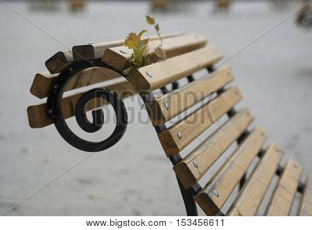Autumn leaves stuck in the bench in a windy autumn day a beach in the blurred background