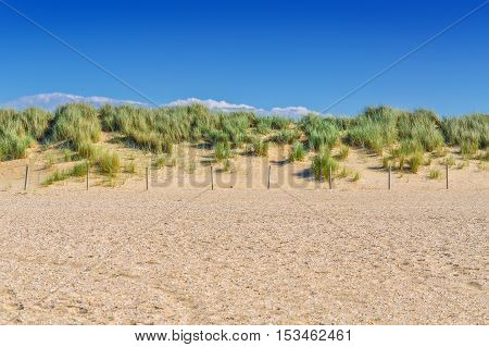 Protected landscape dune on the beach of Holland in the background blue sky.