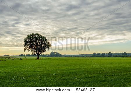 Solitary tree as a silhouette against a cloudy sky in a flat landscape of grassland. It is early in the morning on a day in the beginning of the fall season.