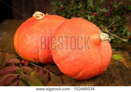 Two Fresh Orange Pumpkin On Rustique Table