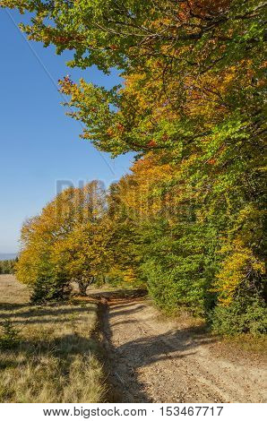 Pathway passing near colorful autumn forest in the sunset time