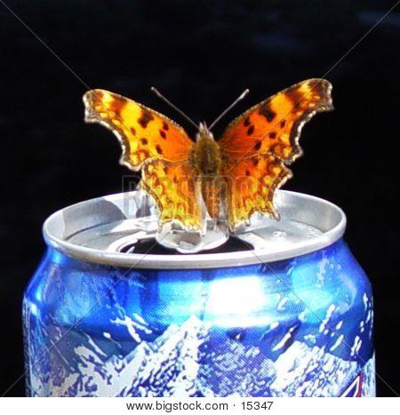 Butterfly On A Busch