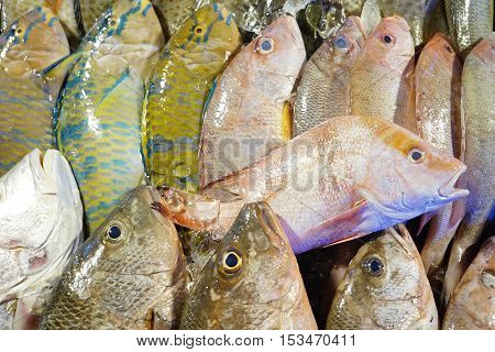 Close up of a variety of fresh fish seafood on display at fish market.