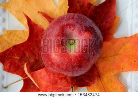 Just picked Macoun apple placed on colorful fall leaves
