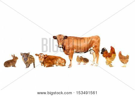 the brown livestock isolated on white background